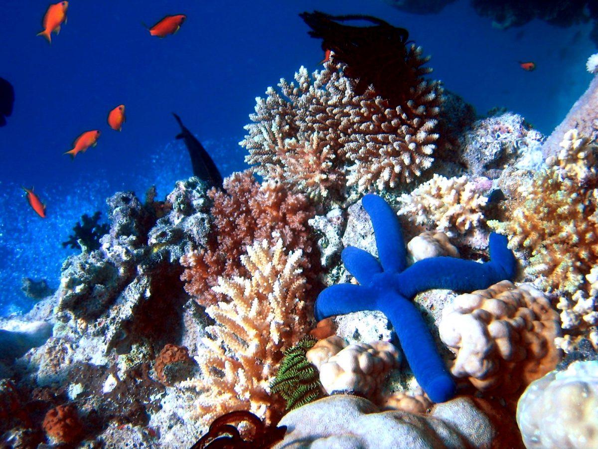 Comment préserver la biodiversité ?